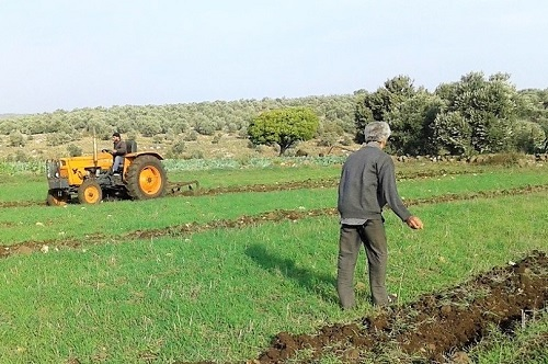 Agriculture project in Syria
