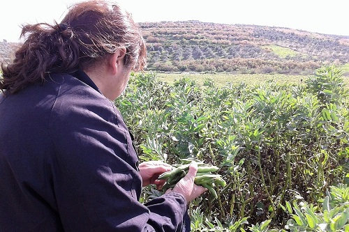 Agriculture project in Syria reunites a widow and her young daughter